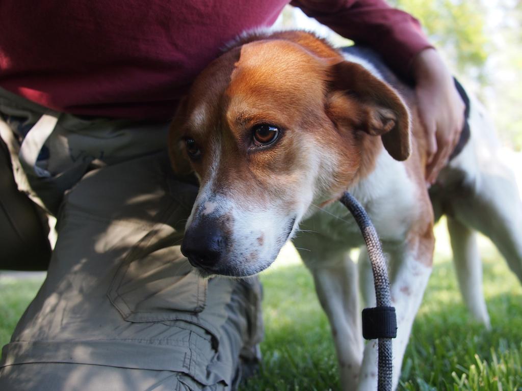 Dog Sitter Daycare